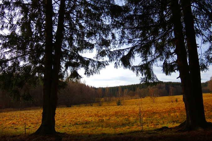 Laubtalblick Harzer Wandernadel Nr. 191