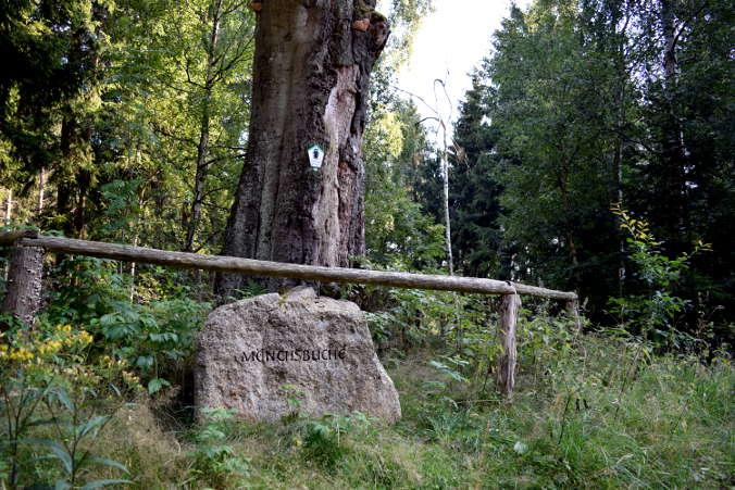 Mönchsbuche Harzer Wandernadel 26
